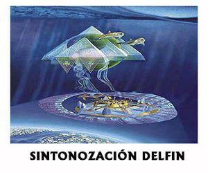 14-sintonozacion-delfin